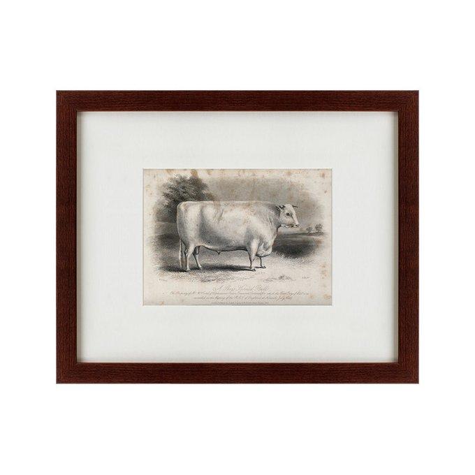 Картина A short horned bull 1849 г.