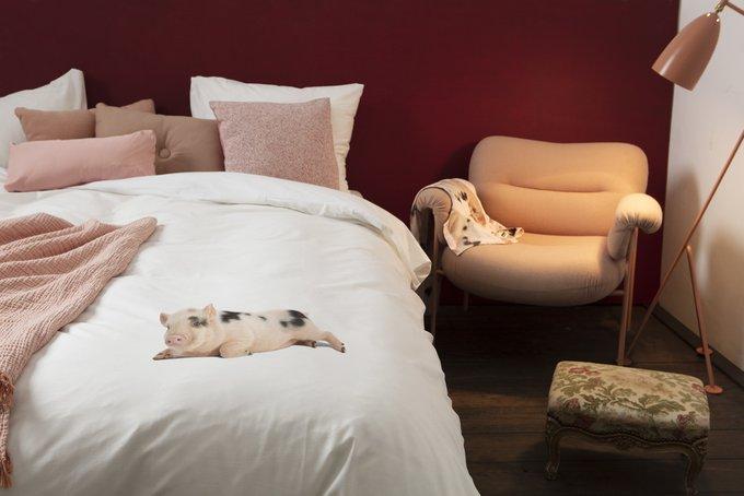 Комплект постельного белья Поросенок белый 200х220