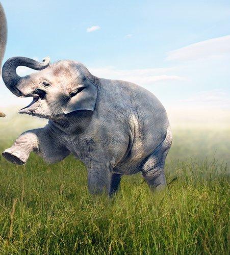 """Интерьерная модульная картина на стену """"Семья слонов"""""""