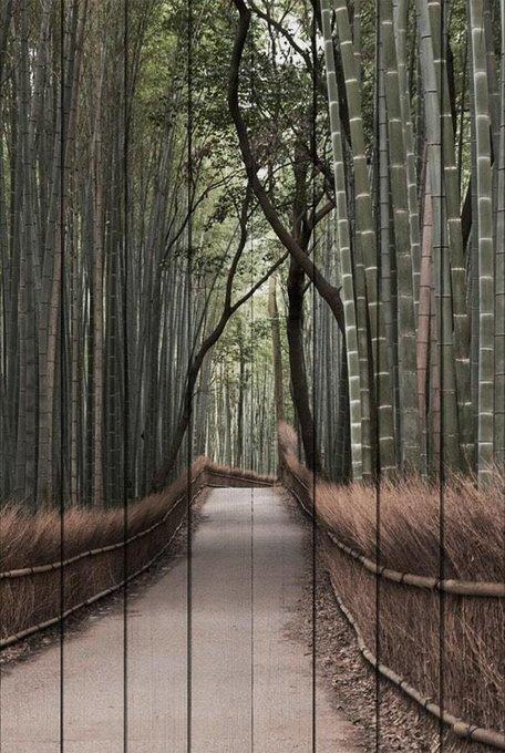 Картина на дереве Бамбуковый лес 60х90