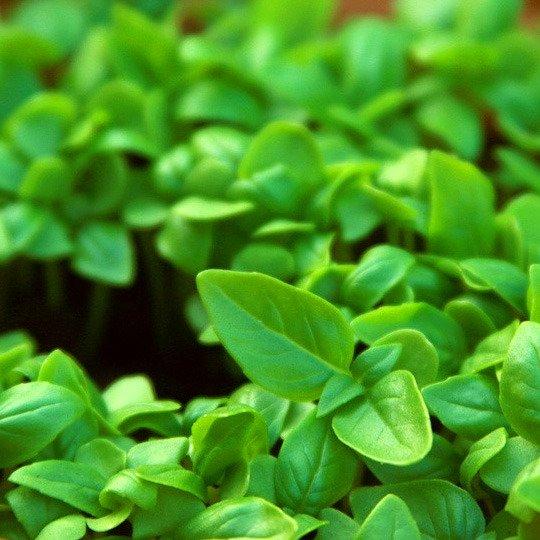 Набор для выращивания 'Aroma Herb'