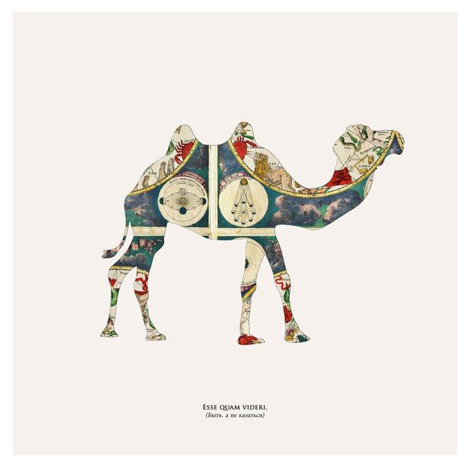 "Картина ""Esse quam videri, верблюд"""