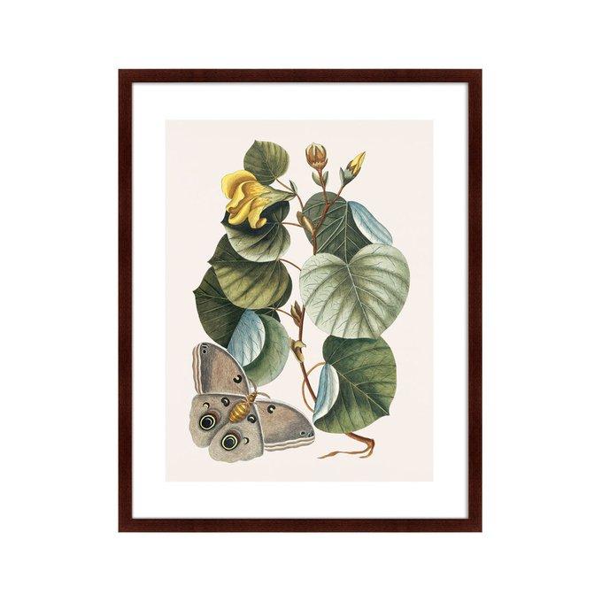 Репродукция картины Beauty bloom №3 1732 г.