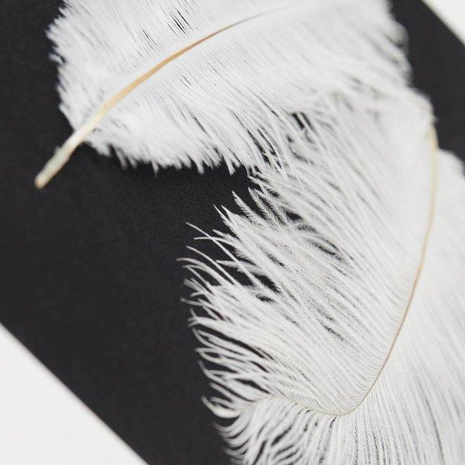 Панно с перьями страуса
