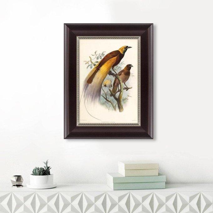 Картина Большая райская птица 1880 г. Даниэль Жиро Эллиот