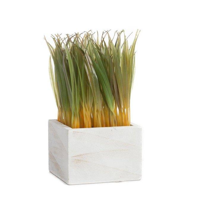 Растение декоративное в горшке Knaki