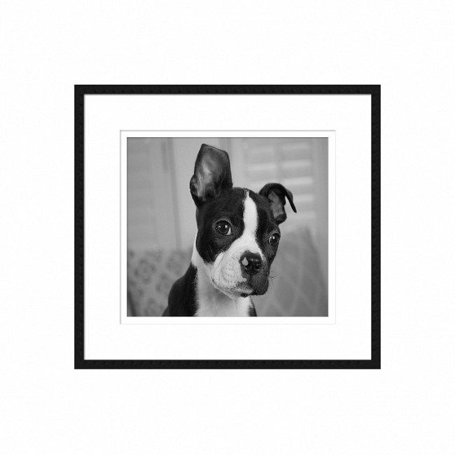 Чёрно-белый постер Kooker с изображением щенка в раме