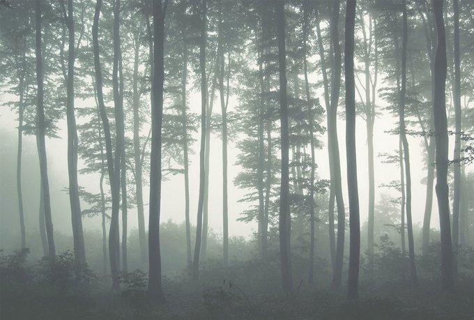 Дизайнерские обои Mystic Fog Grey