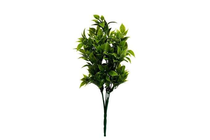 Веточка рускуса зеленого цвета