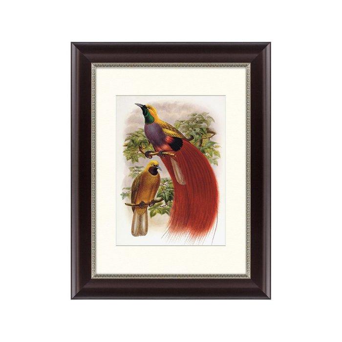 Картина  Гольдиева райская птица 1884 г.