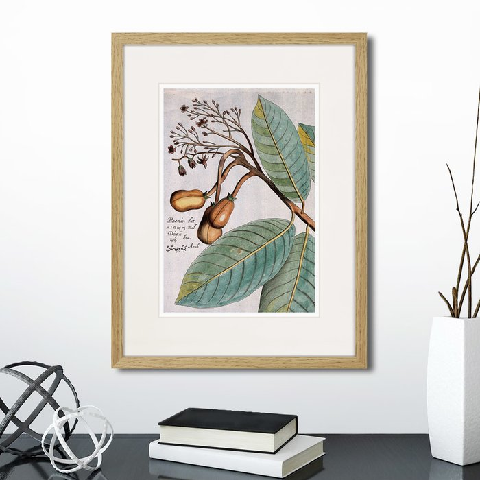 Набор из двух картин Exotic plants of the world №3