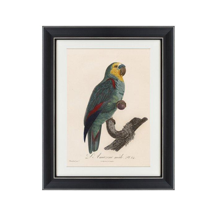 Картина Попугай литография 1801-1805 г.