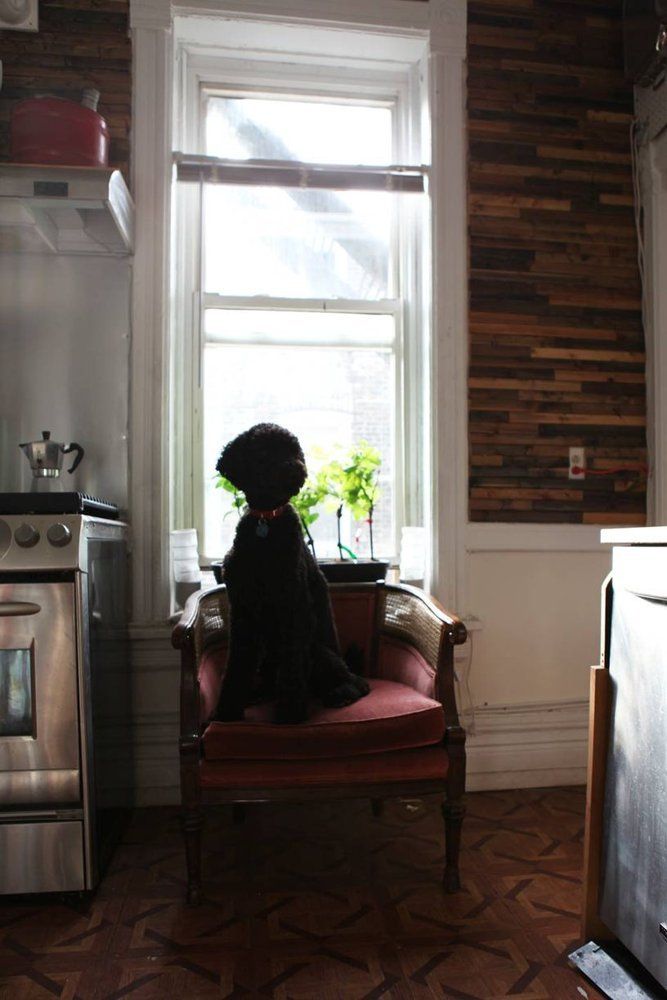 Фотография: Прочее в стиле , Квартира, США, Дома и квартиры, Библиотека – фото на INMYROOM