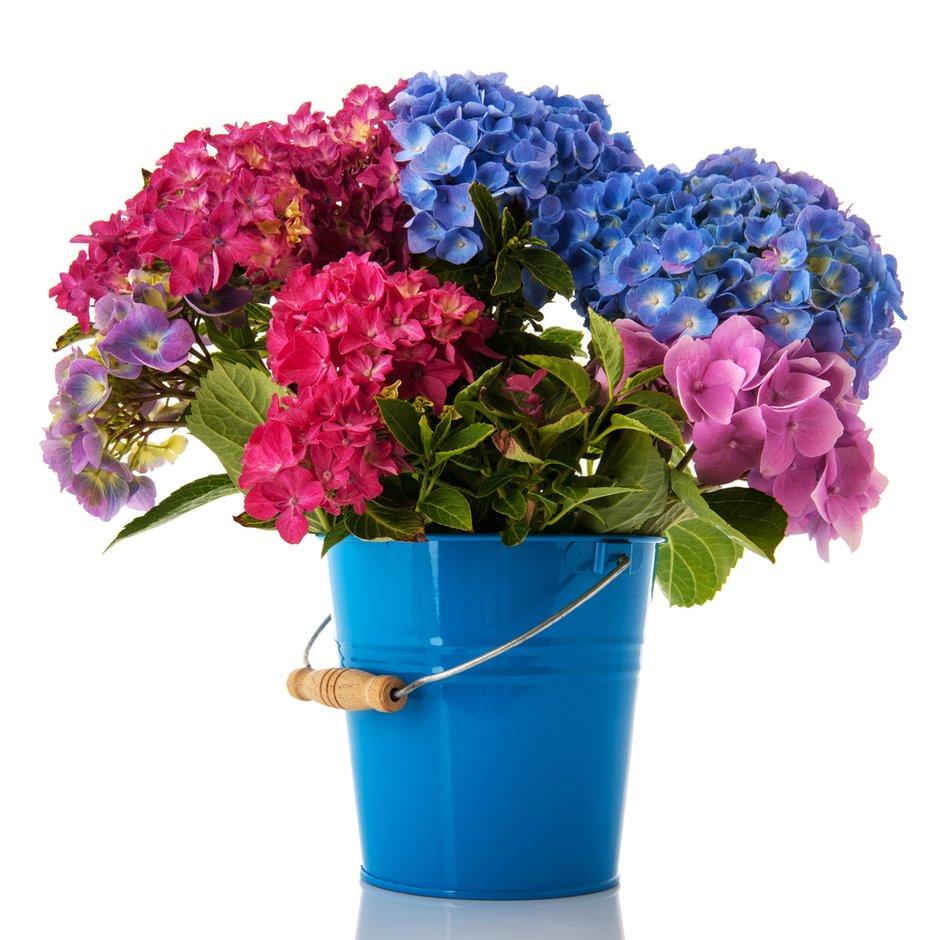 Фотография: Флористика в стиле , Стиль жизни, Дача, Цветы – фото на INMYROOM